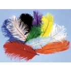 Ostrich Plumes Yellow