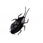 Cockroach Giant