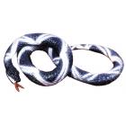 Python 10 Feet