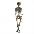 Hanging Skeleton 60In
