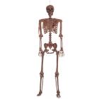 Decayed Pose N Stay Skeleton
