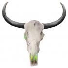 Longhorn Skull 24 Inch Lightup