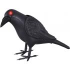 Animated Crow