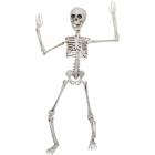 Poseable Skeleton 20 In